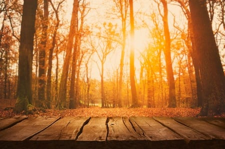 How to Best Honor the Fall Equinox